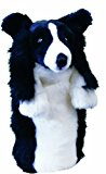 decouvir-daphnes-fantaisie-border-collie